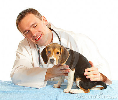 veterinarian-doctor-and-a-beagle-puppy